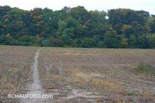 Über ein abgeerntetes Maisfeld gelangen wir zum Kernteil des Parks zurück.