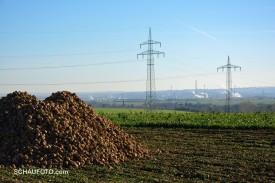 Diese Zuckerrüben warten auf ihre Verarbeitung in der Zeitzer Zuckerfabrik (im Hintergrund), vermute ich.