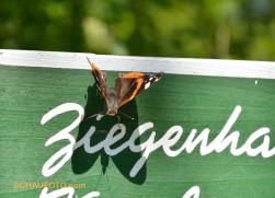 Schmetterlinge sind ein gutes Zeichen für intakte Natur.