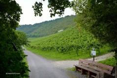 Klein - aber fein: Saale-Unstrut-Wein