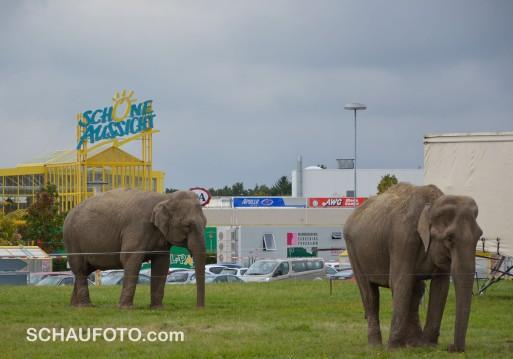 Schöne Aussicht auf Elefanten.