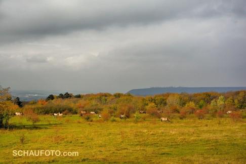 Herbstidylle mit Pferden