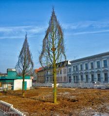 Februar 2015, neue Bäume braucht die Promenade!