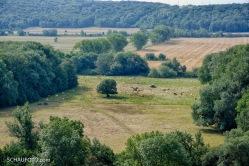 Viehwirtschaft im Saaletal