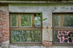 DDR Alufenster mit Baum
