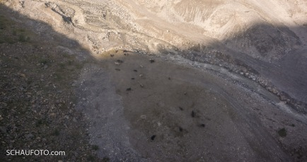 Die Messnersche Yak-Herde am Zufluss zum Wasserfall.