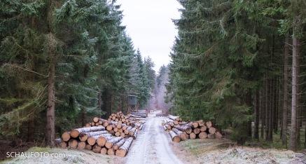 Holzerntezeit. Den Harvester hören wir im Wald.