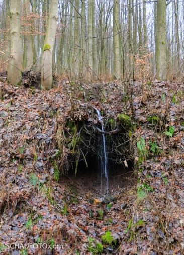 Der wahrscheinlich kleinste Wasserfall Thüringens.