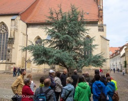 Kontrastprogramm Judensau und Zeder (Stadtkirche)