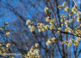 Frühlingsbeweis I